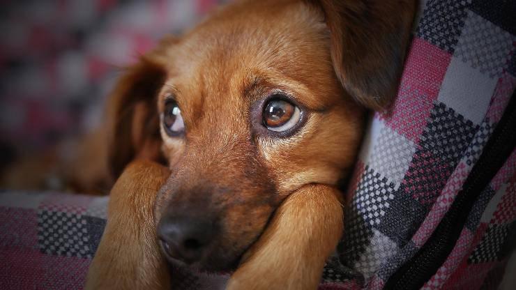 Empatia del cane: i suoi sentimenti