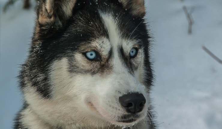 Il cane concentrato (Foto Pixabay)