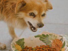 Il cane e i fagioli di soia