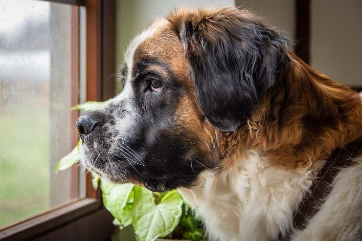 Il cane e le spezie