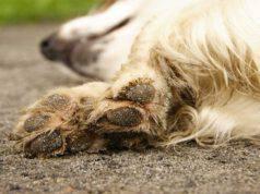 Le razze di cani con le zampe più forti