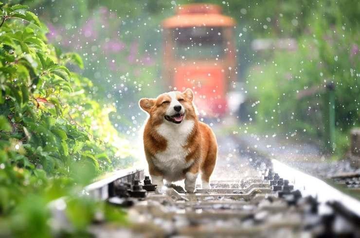 Cane e umidità: come proteggerlo