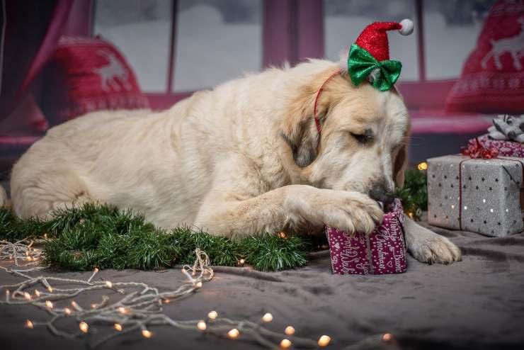 Fido scarta i regali di Natale