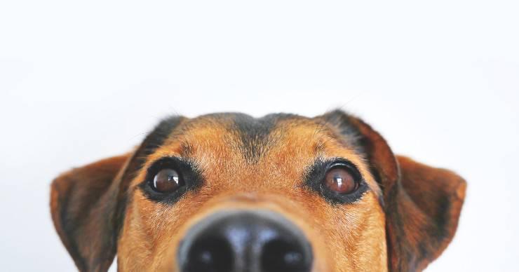 Le emozioni del cane
