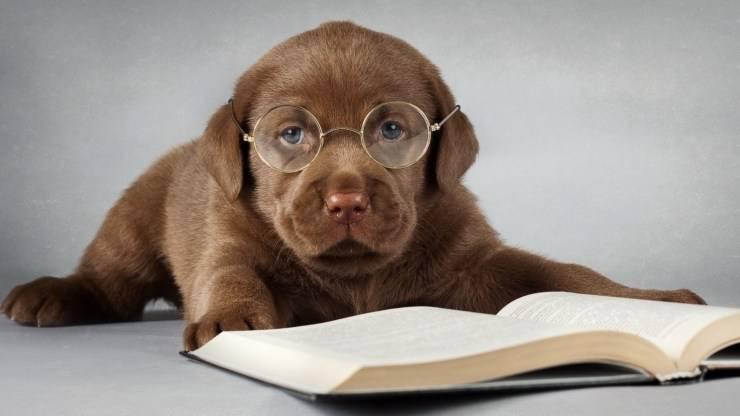 adottare cane oroscopo 2021