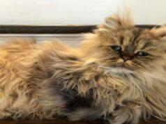 Il gatto Barnaby (Foto Instagram)