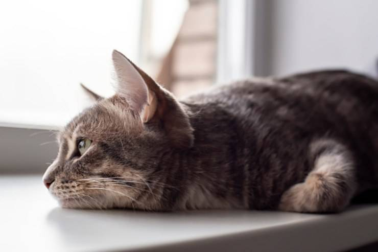gattino triste migliore amico finestra