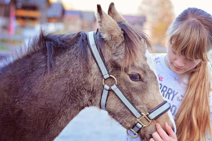 Approccio tra bambini e cavalli