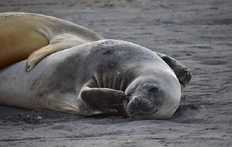 foche abbraccio tra animali