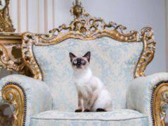gatti eleganti