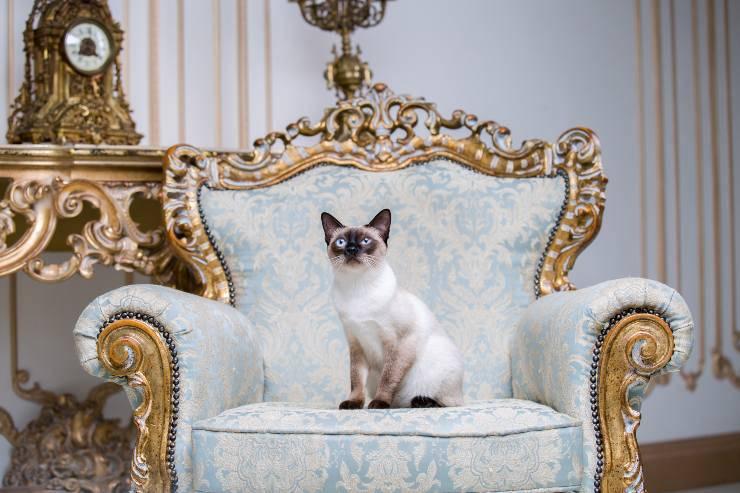 razze di gatti eleganti