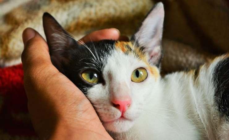 gattino vitamina a