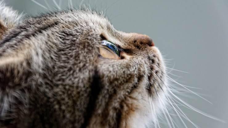 gatto annusa