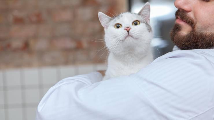 gatto annusa aria