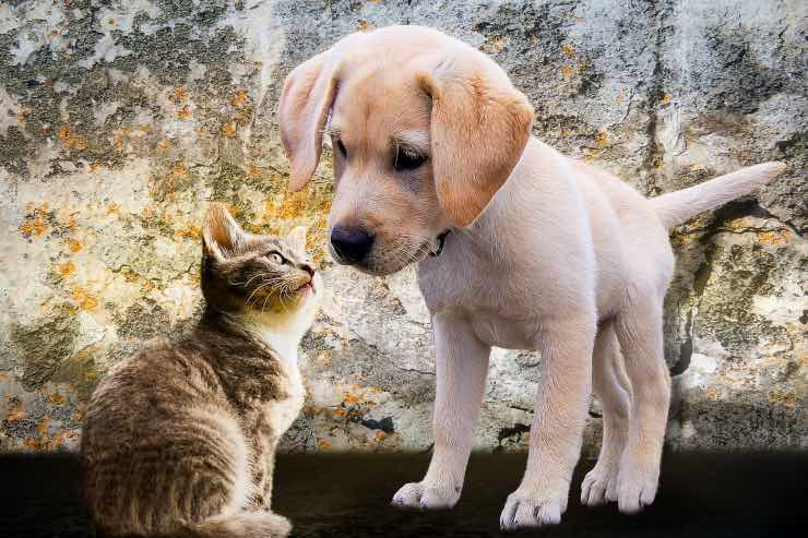 Animali sociali