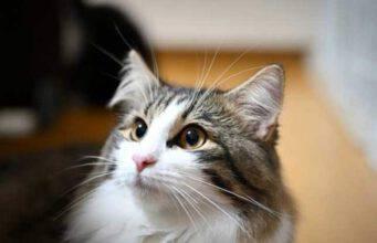 gatti così carini