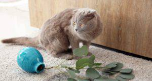 razze di gatti dispettosi