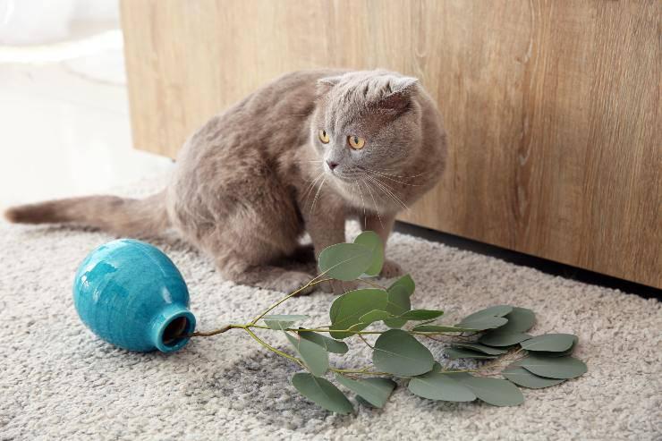 vaso rotto e gatto