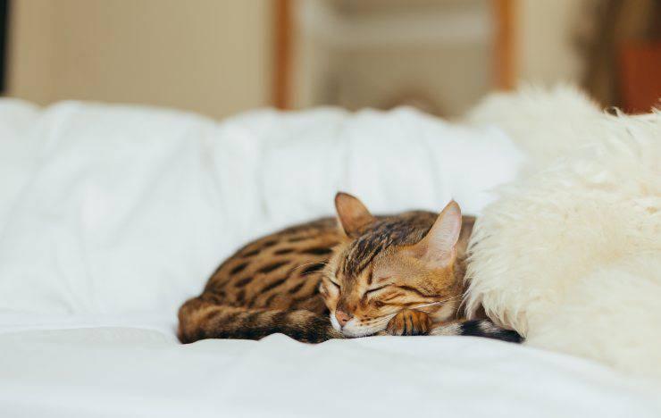 gatto dorme su letto