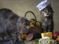 gatto e bresaola