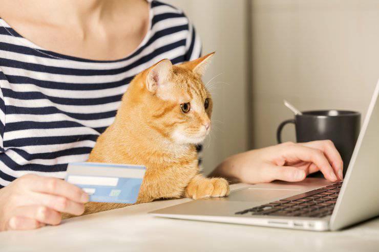 gatto e spesa