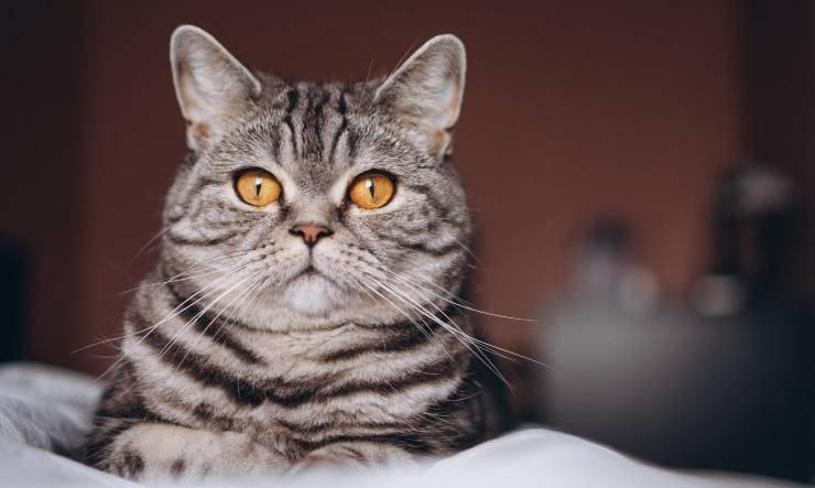 gatto aiuta la nostra salute