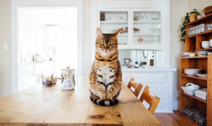 il gatto ha mangiato la crema