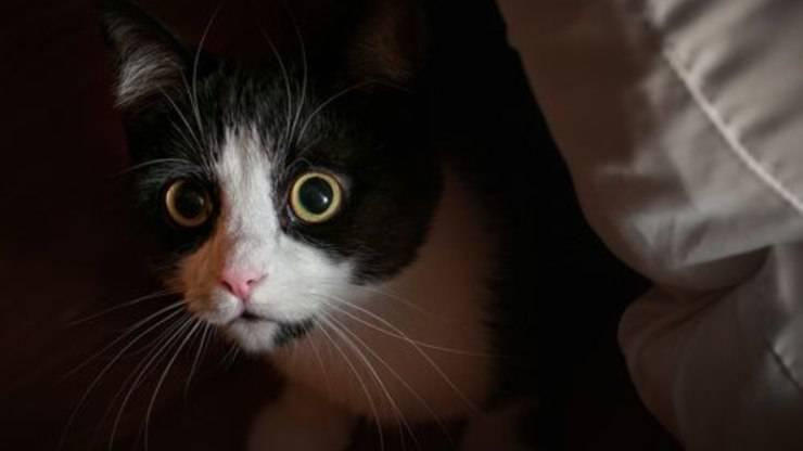 gatto ha paura del phon