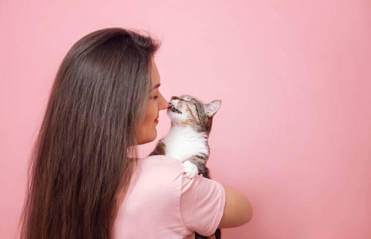 gatto lecca viso