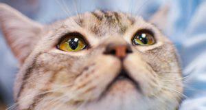 la filaria nel gatto