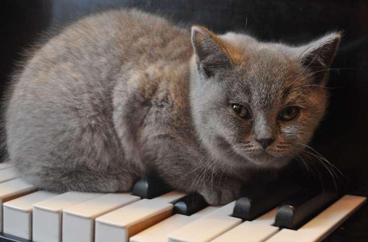 musica antistress gatto