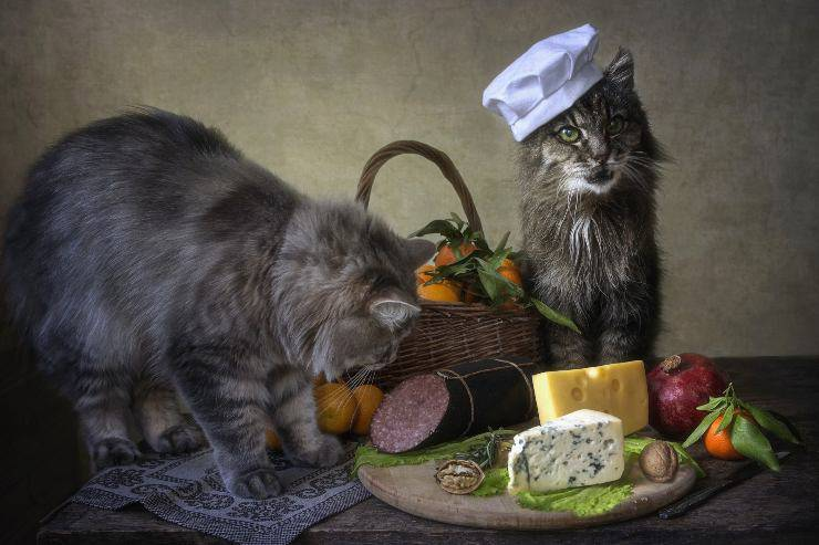 gatto chef