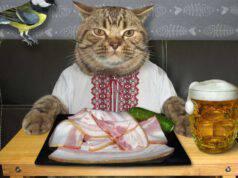 gatto può mangiare la pancetta
