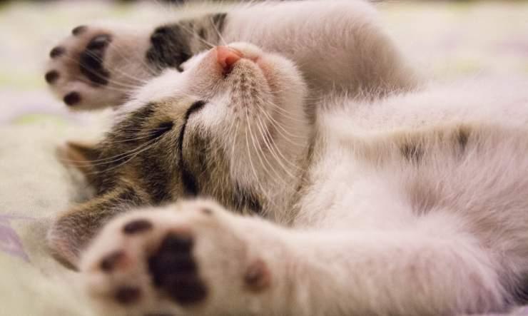antistress gatto