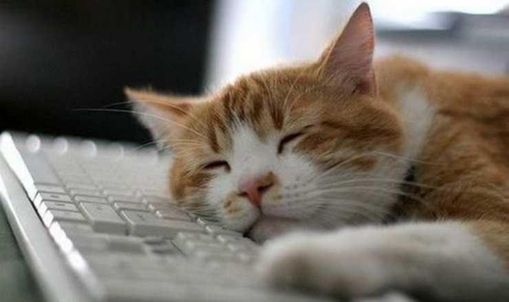 gatto sdraiato su tastiera