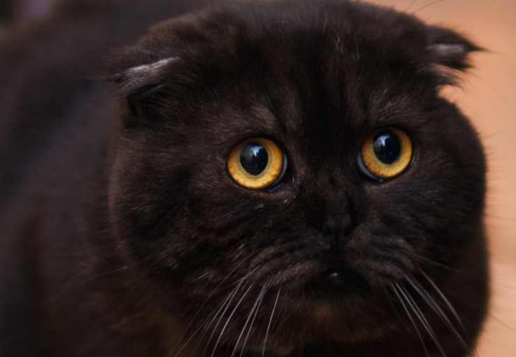 gatto spaventato da phon