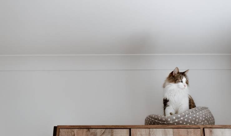 gatto salta su mobile