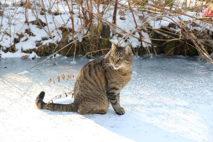 Micio nella neve
