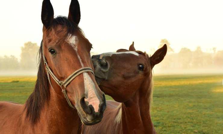 Cavalli felici (Foto Pixabay)