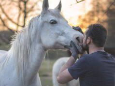 i cavalli si affezionano alle persone