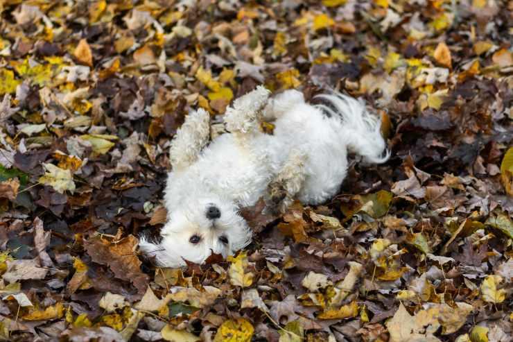 cane si rotola su cose puzzolenti