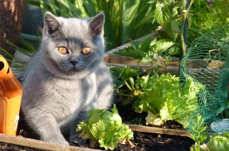 il gatto può mangiare le scarole