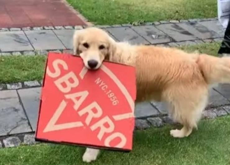 cane immondizia solo
