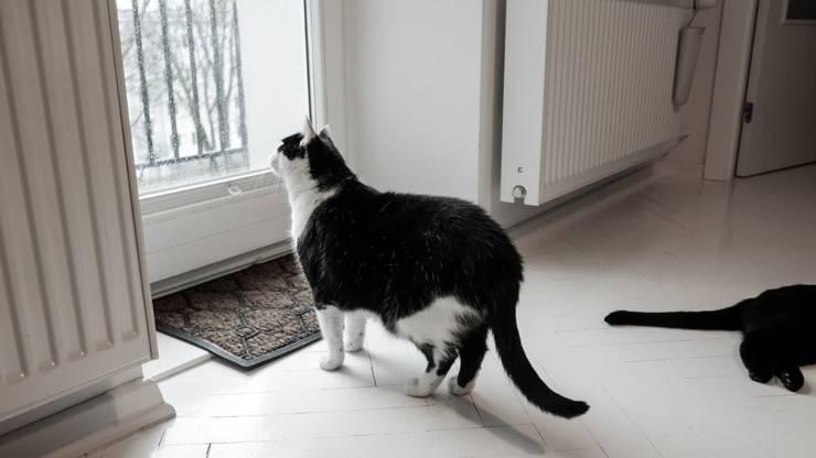 gatti soli in casa gatto micio solo