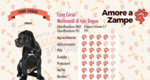 infografica cane corso italiano