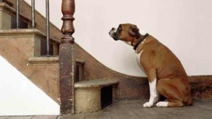 insegnare al cane a fare le scale