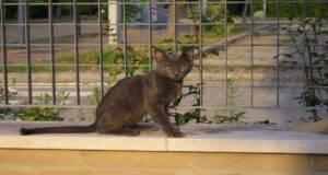 Gattino troppo magro
