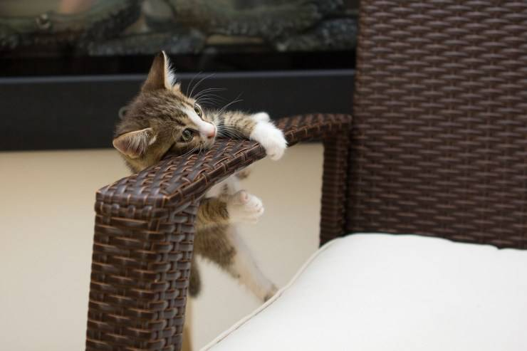 gatto gattino gatti imitano comportamenti umani