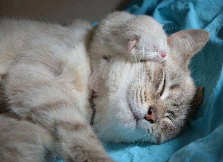 Gattino e mamma gatta