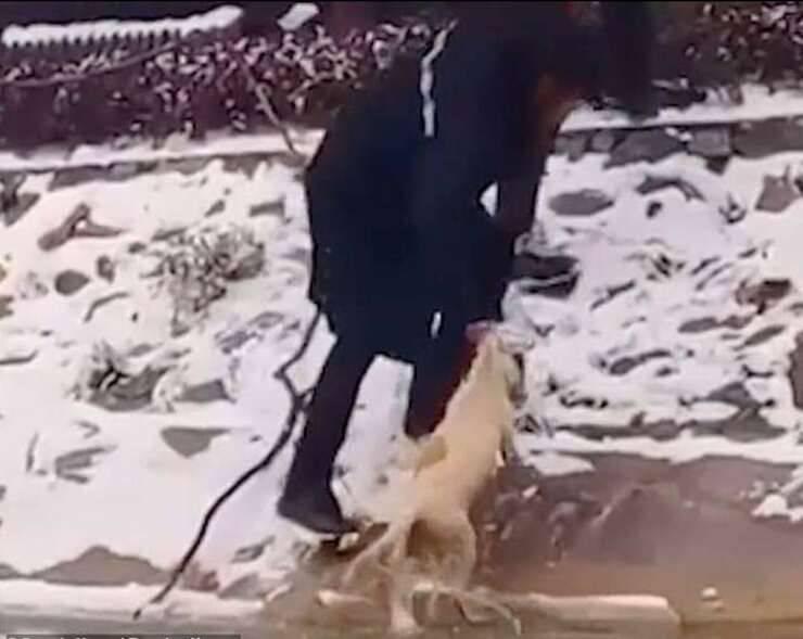 Catena umana per salvare il cane nel lago ghiacciato